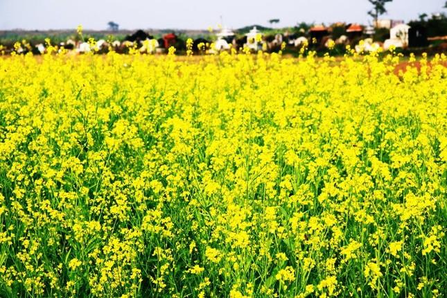 Đẹp rạng ngời Hà Nội 12 mùa hoa (phần 2) - anh 12
