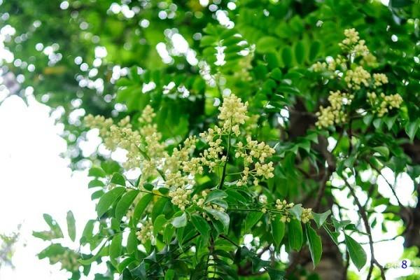 Đẹp rạng ngời Hà Nội 12 mùa hoa (phần 2) - anh 2