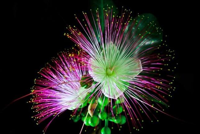 Du lịch Lý Sơn chiêm ngưỡng vẻ đẹp của hoa bàng vuông - anh 5
