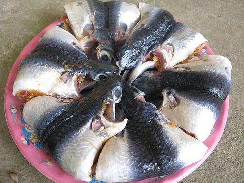 Cá chuồn - món ngon thân thuộc xứ Quảng - anh 3