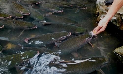 Du lịch Thanh Hóa tìm hiểu những câu chuyện huyền bí ở suối cá thần - anh 7