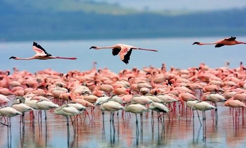 KENYA – Trải nghiệm tuyệt vời tại thiên đường động vật hoang dã - anh 3
