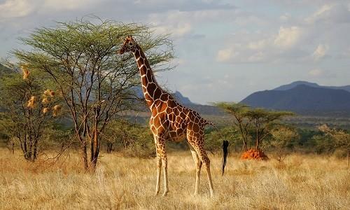 KENYA – Trải nghiệm tuyệt vời tại thiên đường động vật hoang dã - anh 4