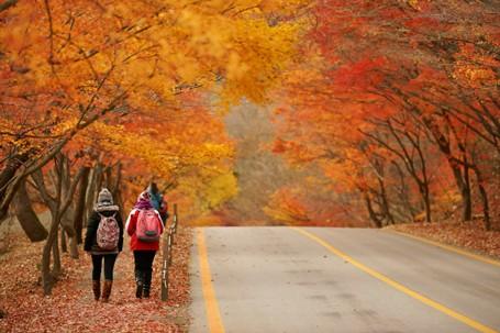 Cơ hội chiêm ngưỡng mùa thu vàng Hàn Quốc với nhiều ưu đãi hấp dẫn - anh 2