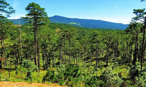 Vườn quốc gia Bidoup Núi Bà điểm đến mới mẻ dành cho giới trẻ - anh 3