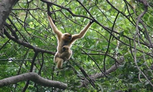 Vườn quốc gia Bidoup Núi Bà điểm đến mới mẻ dành cho giới trẻ - anh 7