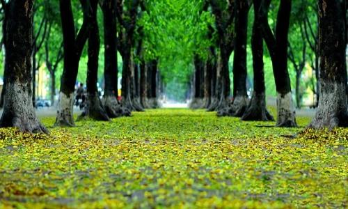 Những điểm đến ngập sắc màu vào thu nhất Việt Nam - anh 1