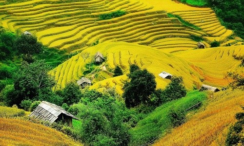 Những điểm đến ngập sắc màu vào thu nhất Việt Nam - anh 5