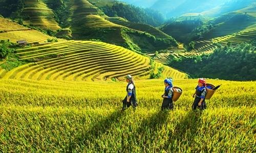 Những điểm đến ngập sắc màu vào thu nhất Việt Nam - anh 6