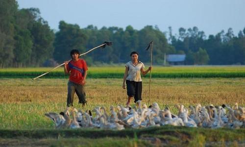 Hình ảnh tươi đẹp của Việt Nam qua các bộ phim nổi tiếng - anh 1