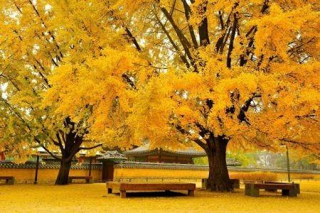 Khám phá mùa thu đẹp như tranh vẽ tại xứ sở Kim Chi - anh 3