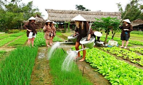 Ghé thăm làng rau Trà Quế, một trong 10 điểm du lịch hấp dẫn - anh 2