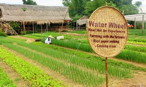 Điểm danh những làng rau nổi tiếng dọc miền đất nước - anh 6