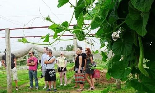 Điểm danh những làng rau nổi tiếng dọc miền đất nước - anh 7