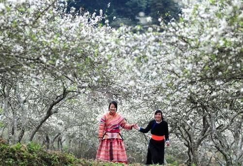 Điểm danh những con đường hoa đẹp ngây ngất ở Việt Nam - anh 14