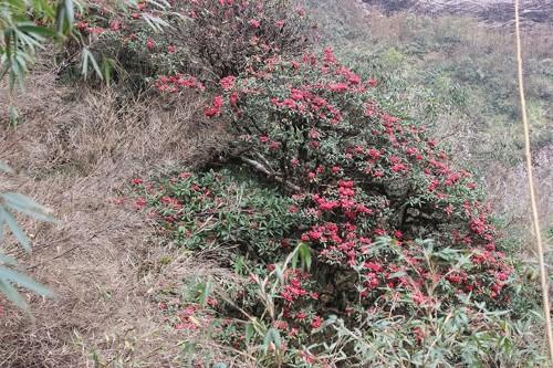 Điểm danh những con đường hoa đẹp ngây ngất ở Việt Nam - anh 5