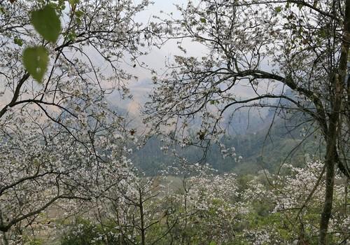 Điểm danh những con đường hoa đẹp ngây ngất ở Việt Nam - anh 4