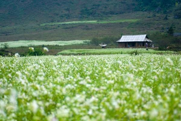 Điểm danh những con đường hoa đẹp ngây ngất ở Việt Nam - anh 13