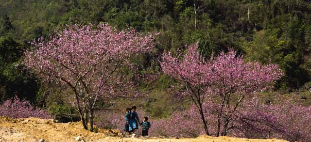 Điểm danh những con đường hoa đẹp ngây ngất ở Việt Nam - anh 11