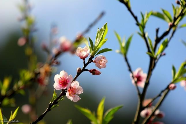 Điểm danh những con đường hoa đẹp ngây ngất ở Việt Nam - anh 12