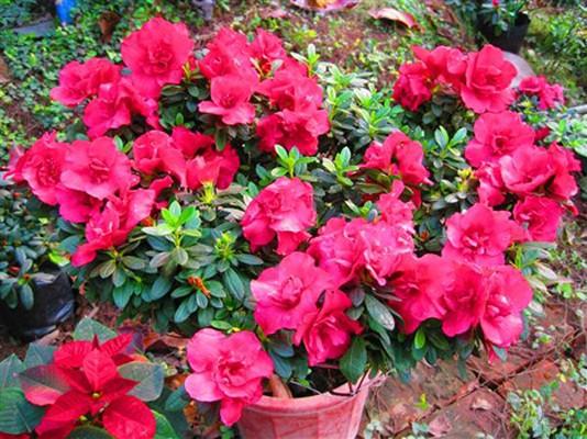 Điểm danh những con đường hoa đẹp ngây ngất ở Việt Nam - anh 6