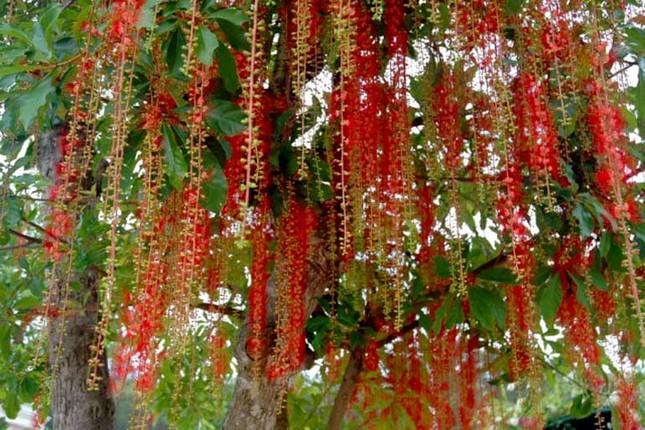 Điểm danh những con đường hoa đẹp ngây ngất ở Việt Nam - anh 7