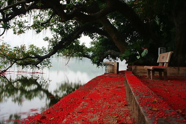 Điểm danh những con đường hoa đẹp ngây ngất ở Việt Nam - anh 8