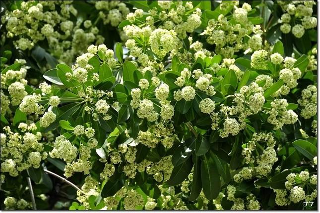 Điểm danh những con đường hoa đẹp ngây ngất ở Việt Nam - anh 1