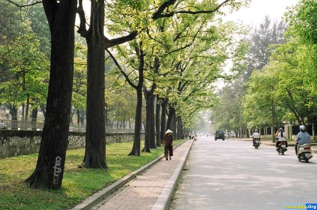 Điểm danh những con đường hoa đẹp ngây ngất ở Việt Nam - anh 2