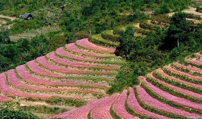Điểm danh những con đường hoa đẹp ngây ngất ở Việt Nam - anh 10