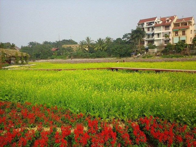 Những vườn hoa gần Hà Nội lý tưởng cho chuyến đi giáp Tết 2015 - anh 10