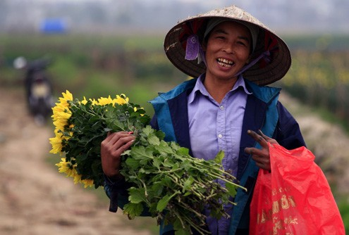 Những vườn hoa gần Hà Nội lý tưởng cho chuyến đi giáp Tết 2015 - anh 5