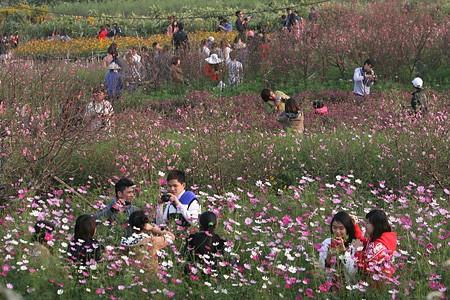 Những vườn hoa gần Hà Nội lý tưởng cho chuyến đi giáp Tết 2015 - anh 3