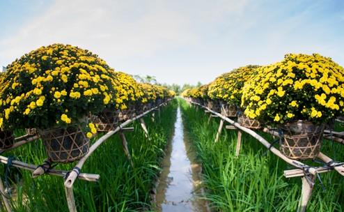 Hai làng hoa kiểng lý tưởng cho chuyến du xuân dịp giáp Tết ở Sài Gòn - anh 5
