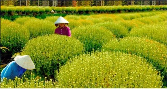 Hai làng hoa kiểng lý tưởng cho chuyến du xuân dịp giáp Tết ở Sài Gòn - anh 4