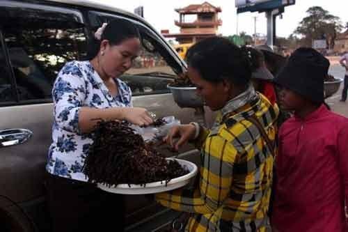 Rùng mình với món nhện đen chiên giòn đặc sản của Campuchia - anh 3