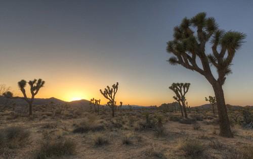 Độc đáo bể bơi bí mật giữa sa mạc Mojave, California - anh 2