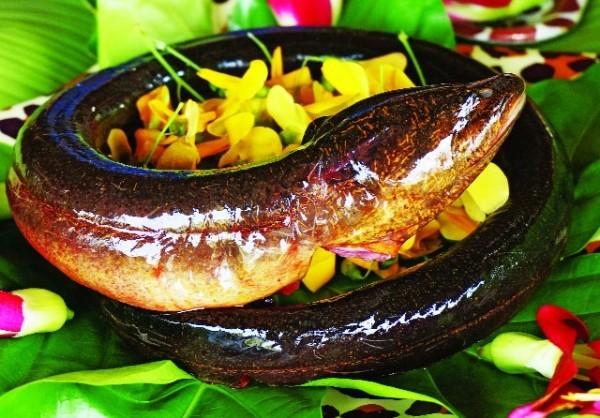 Điểm danh những món lươn ngon từ Bắc vào Nam - anh 8