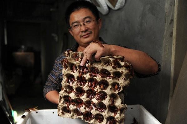 Rùng mình trước món thịt gián đặc sản mới của Trung Quốc - anh 2
