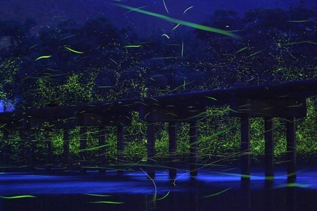 Mê mẩn với con đường đom đóm huyền ảo ở Nhật - anh 3