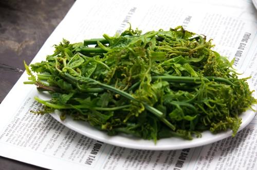 Xao xuyến với món rau dớn đặc sản núi rừng - anh 1