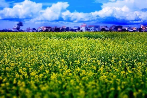 Điểm danh những địa điểm chụp ảnh đẹp làm say lòng giới trẻ Hà Thành - anh 2