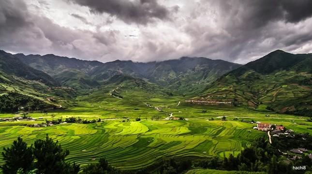 Đẹp mê hồn những cánh đồng lúa miền Bắc vào mùa gặt - anh 1
