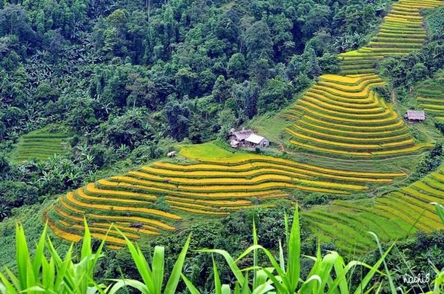 Đẹp mê hồn những cánh đồng lúa miền Bắc vào mùa gặt - anh 11