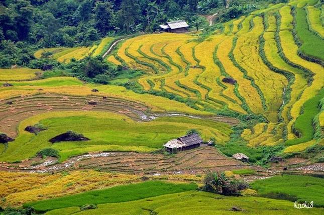 Đẹp mê hồn những cánh đồng lúa miền Bắc vào mùa gặt - anh 12