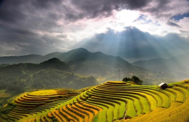 Đẹp mê hồn những cánh đồng lúa miền Bắc vào mùa gặt - anh 13