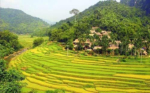 Đẹp mê hồn những cánh đồng lúa miền Bắc vào mùa gặt - anh 14