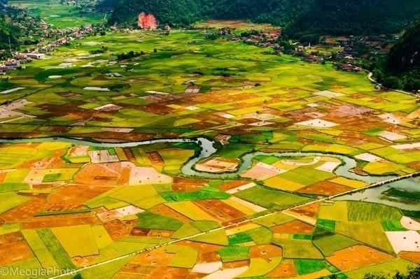 Đẹp mê hồn những cánh đồng lúa miền Bắc vào mùa gặt - anh 16
