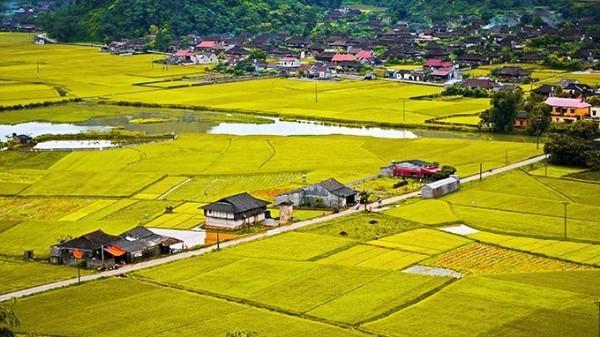 Đẹp mê hồn những cánh đồng lúa miền Bắc vào mùa gặt - anh 18