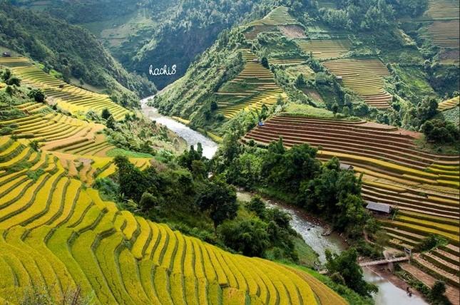 Đẹp mê hồn những cánh đồng lúa miền Bắc vào mùa gặt - anh 3